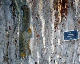 Secret-squirrel-Whitehouse